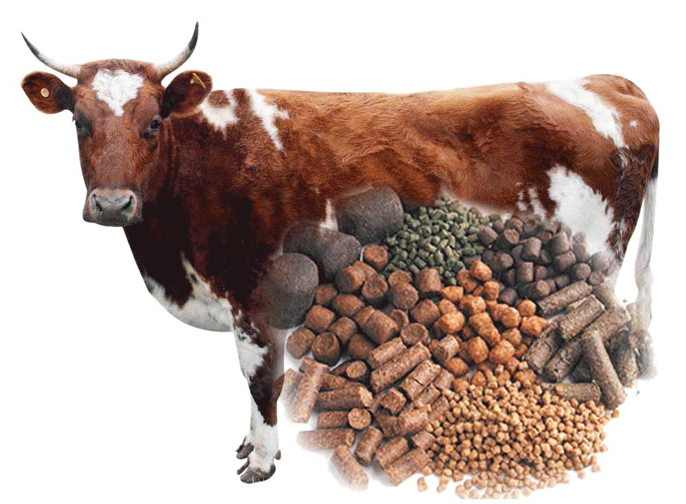 штрудель картинка корма коров это меняет погоды