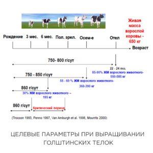 Целевые параметры при выращивании голштинских телок