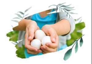Фитобиотик в птицеводстве